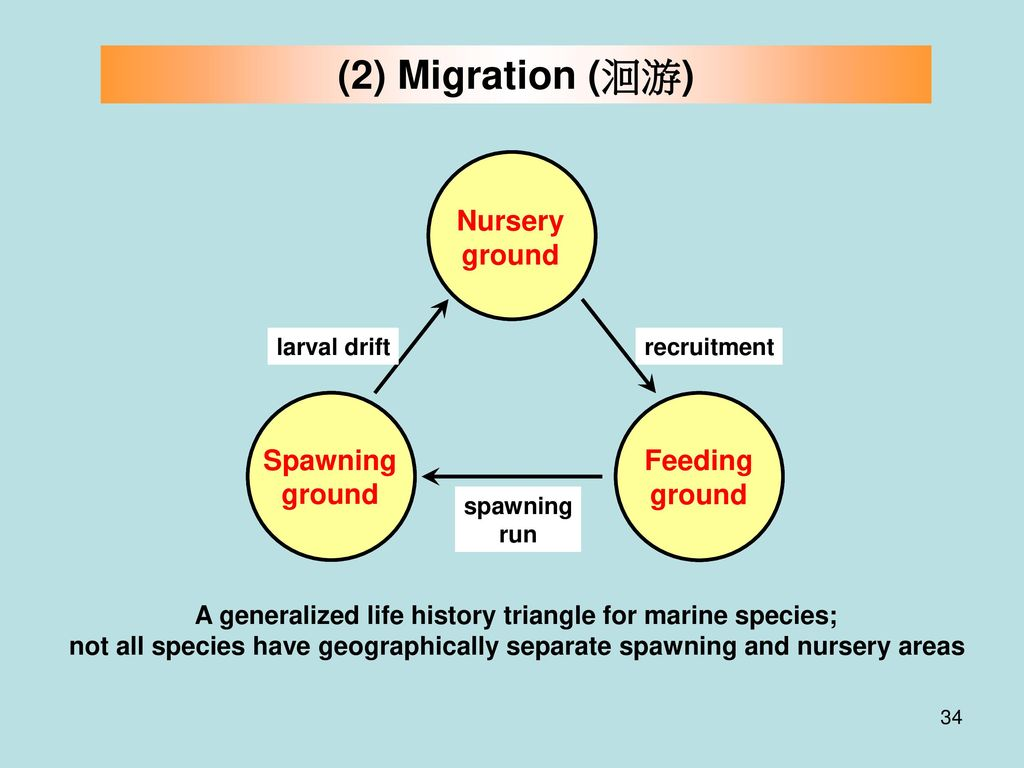 A generalized life history triangle for marine species;