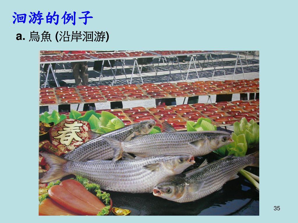洄游的例子 a. 烏魚 (沿岸洄游)