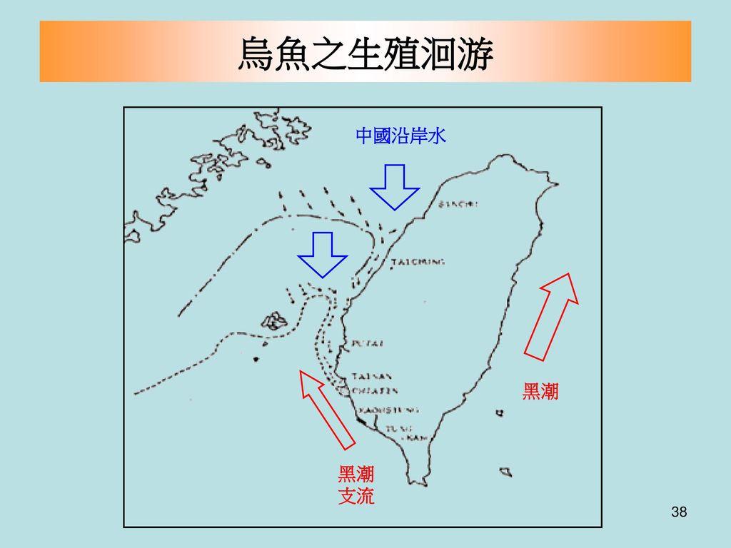 烏魚之生殖洄游 黑潮 支流 中國沿岸水