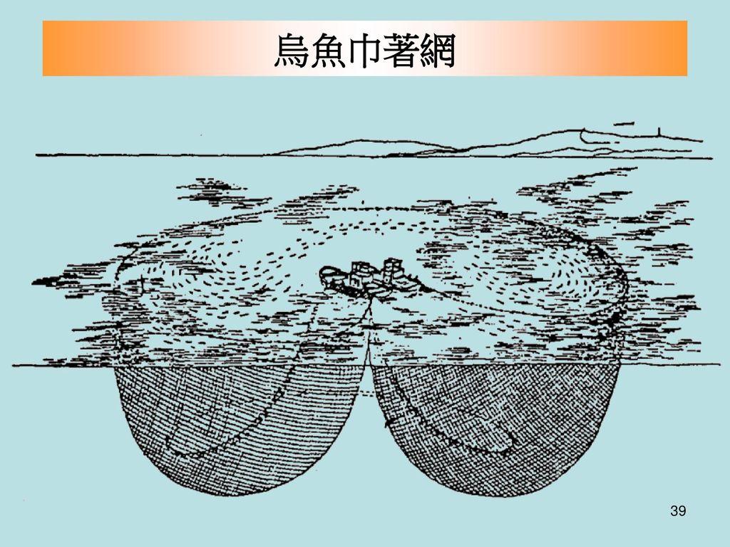 烏魚巾著網