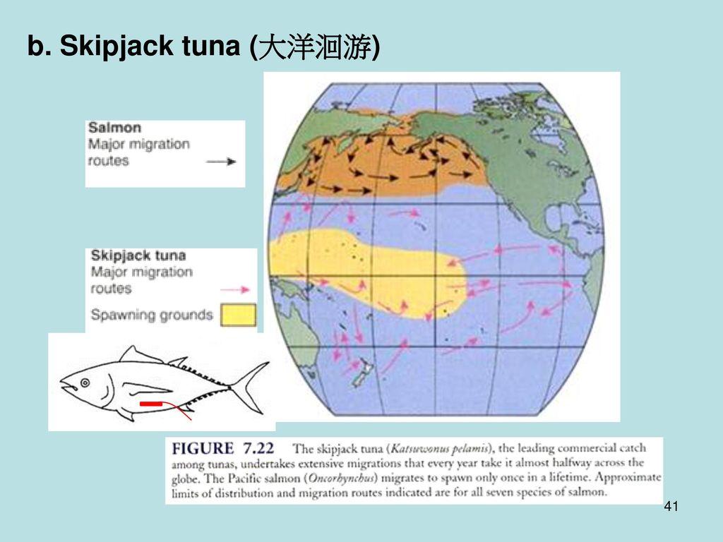 b. Skipjack tuna (大洋洄游)