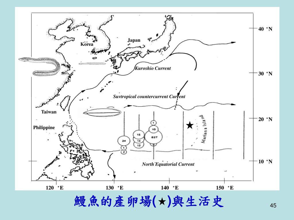鰻魚的產卵場( )與生活史 20 ° N 10 120 E 130 140 150 30 40 Japan Korea China