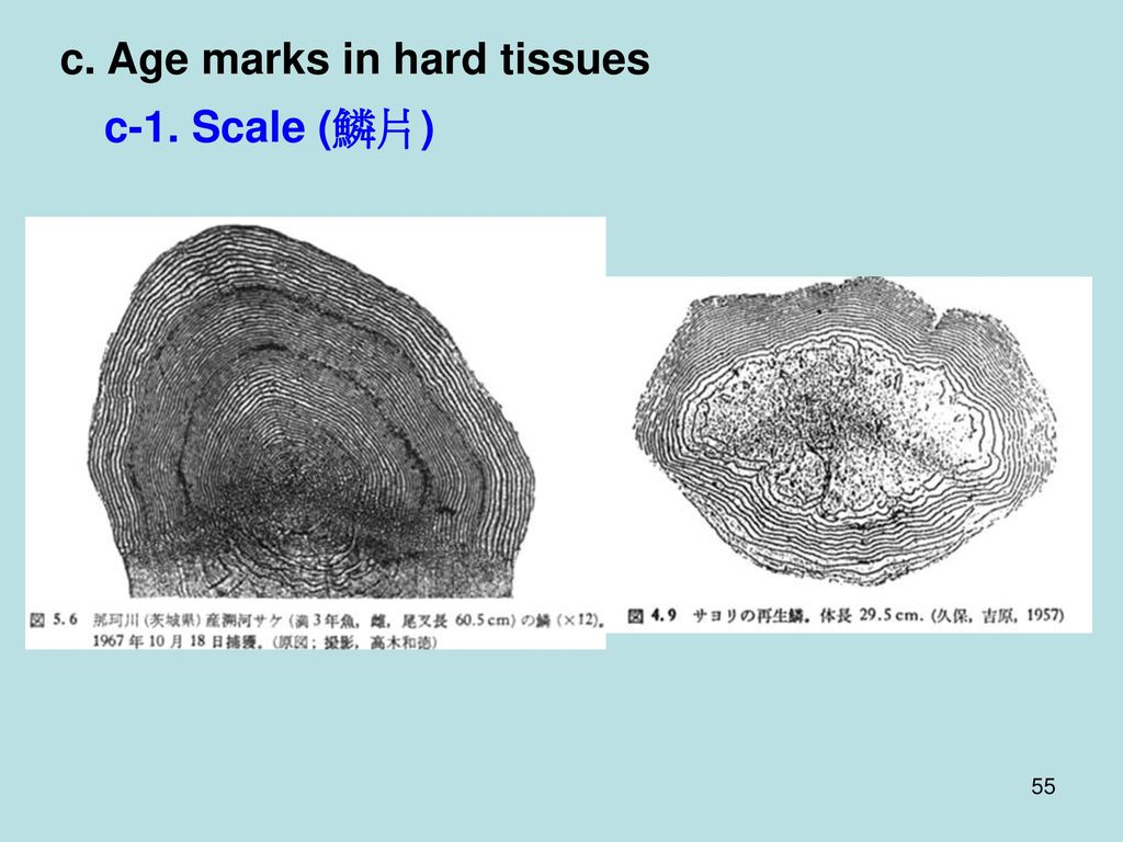 c. Age marks in hard tissues