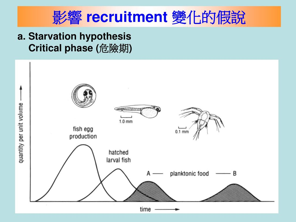 影響 recruitment 變化的假說 a. Starvation hypothesis Critical phase (危險期)