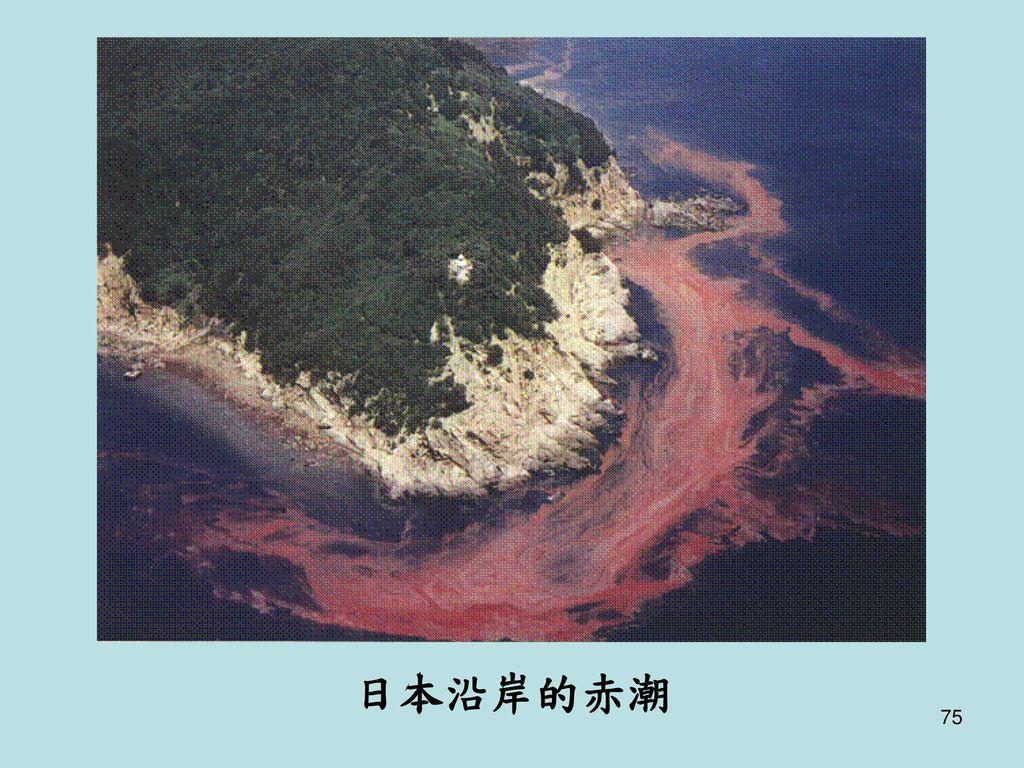 日本沿岸的赤潮