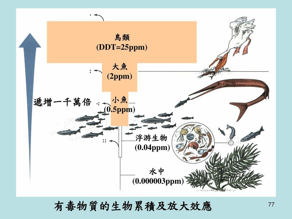 有毒物質的生物累積及放大效應 遞增一千萬倍 鳥類 (DDT=25ppm) 大魚 (2ppm) 小魚 (0.5ppm) 浮游生物