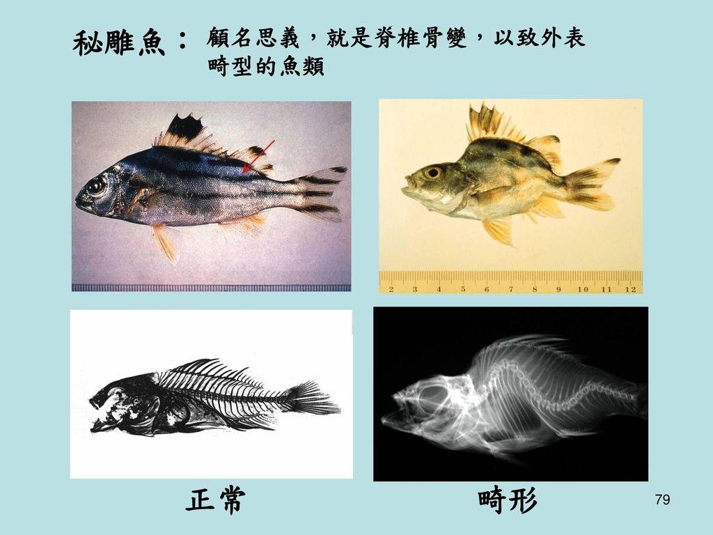 秘雕魚: 顧名思義,就是脊椎骨變,以致外表畸型的魚類 正常 畸形