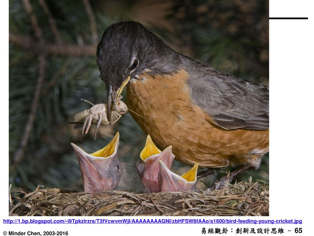 http://1.bp.blogspot.com/-i9Tpkzlrzrs/T3fVcwvmWjI/AAAAAAAAGNI/zbHFSW8fAAo/s1600/bird-feeding-young-cricket.jpg