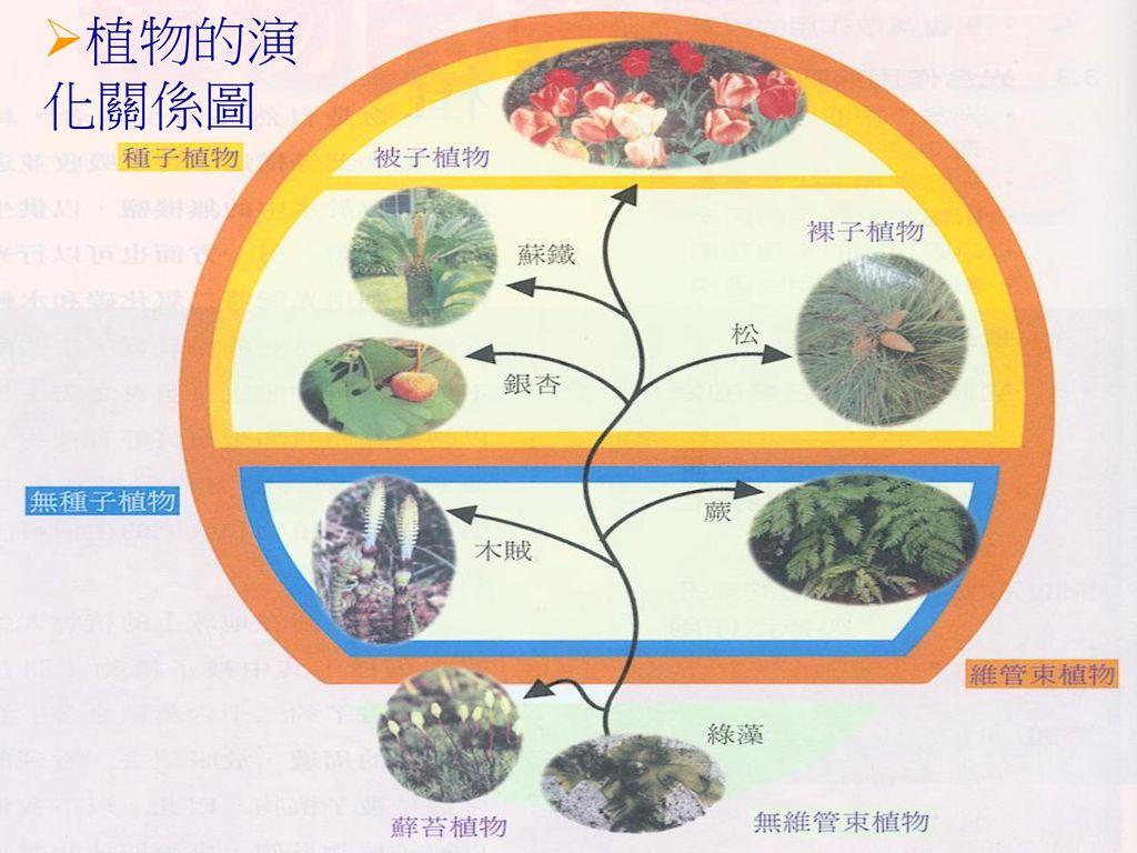 植物的演化關係圖