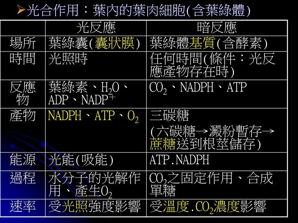 光合作用:葉內的葉肉細胞(含葉綠體) 光反應. 暗反應. 場所. 葉綠囊(囊狀膜) 葉綠體基質(含酵素) 時間. 光照時. 任何時間(條件:光反應產物存在時) 反應物. 葉綠素、H2O、ADP、NADP+