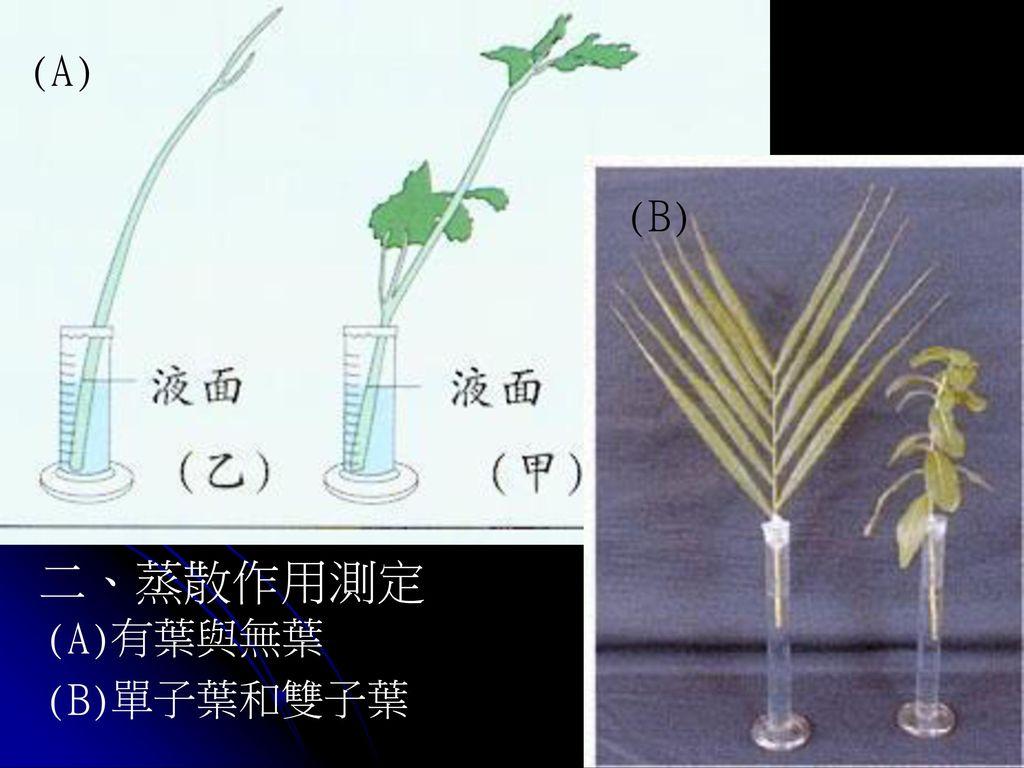 (A) (B) 二、蒸散作用測定 (A)有葉與無葉 (B)單子葉和雙子葉