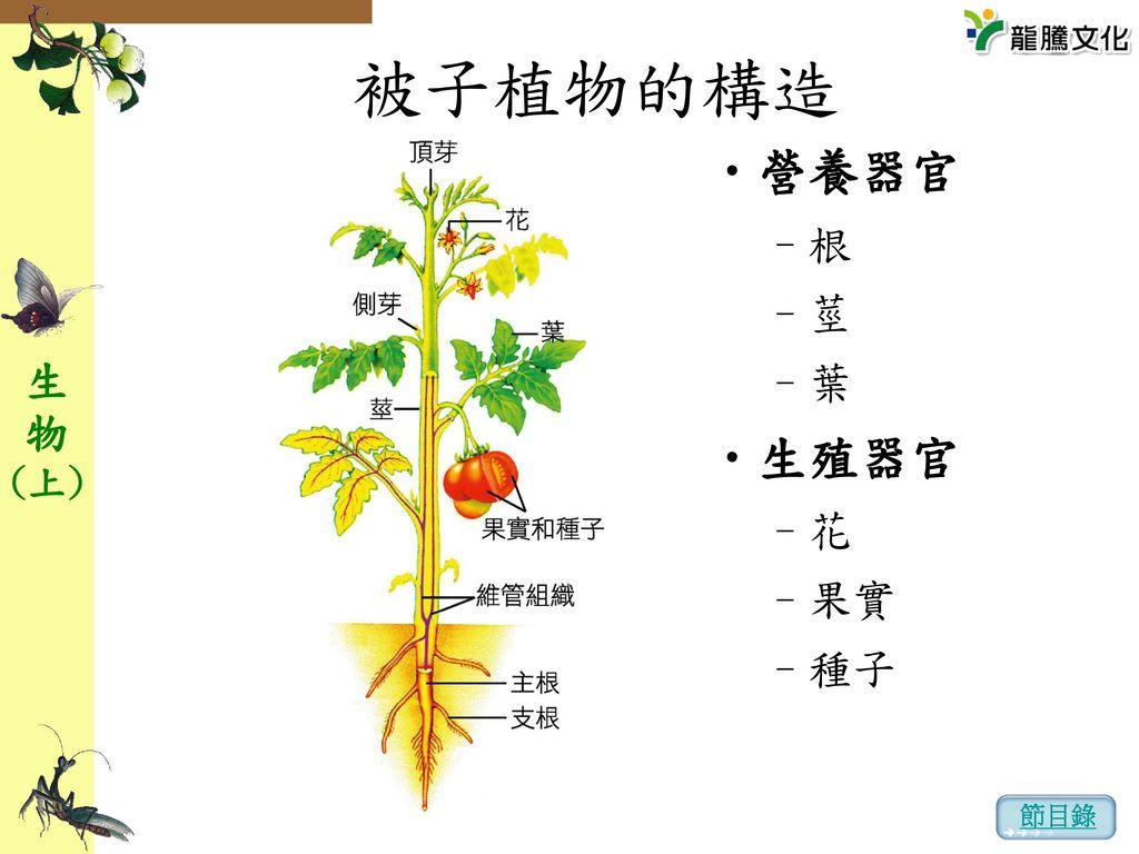 被子植物的構造 營養器官 根 莖 葉 生殖器官 花 果實 種子