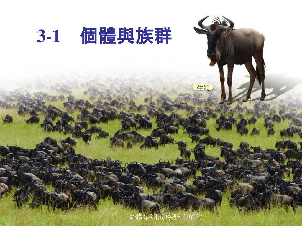 3-1 個體與族群 牛羚 個體是組成族群的單位