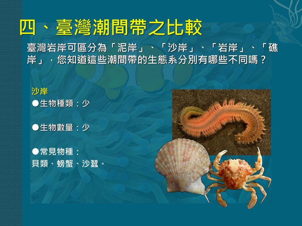 四、臺灣潮間帶之比較 臺灣岩岸可區分為「泥岸」、「沙岸」、「岩岸」、「礁岸」,您知道這些潮間帶的生態系分別有哪些不同嗎? 沙岸