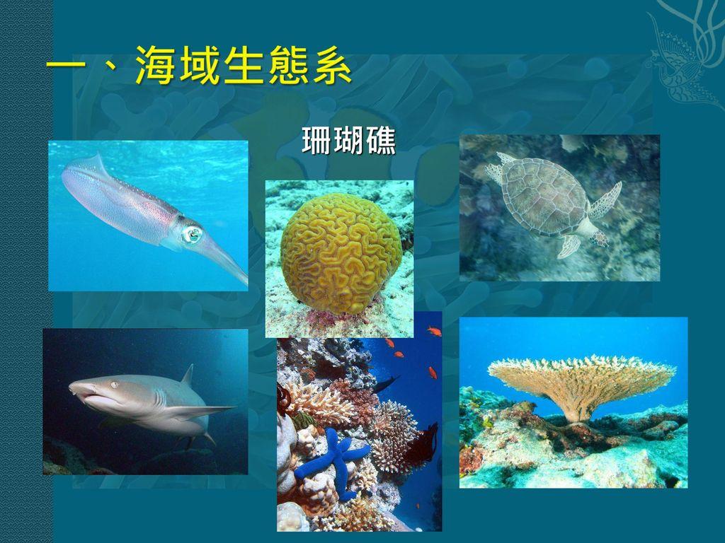 一、海域生態系 珊瑚礁