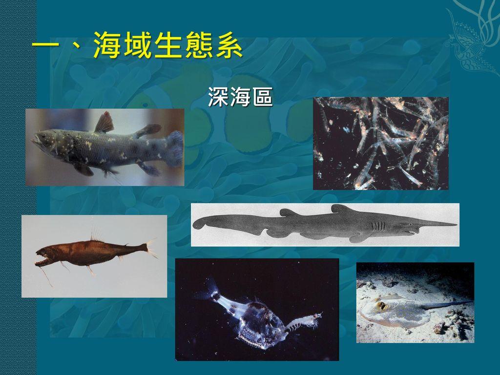 一、海域生態系 深海區