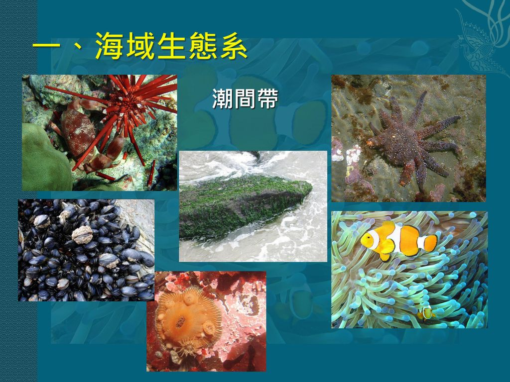 一、海域生態系 潮間帶