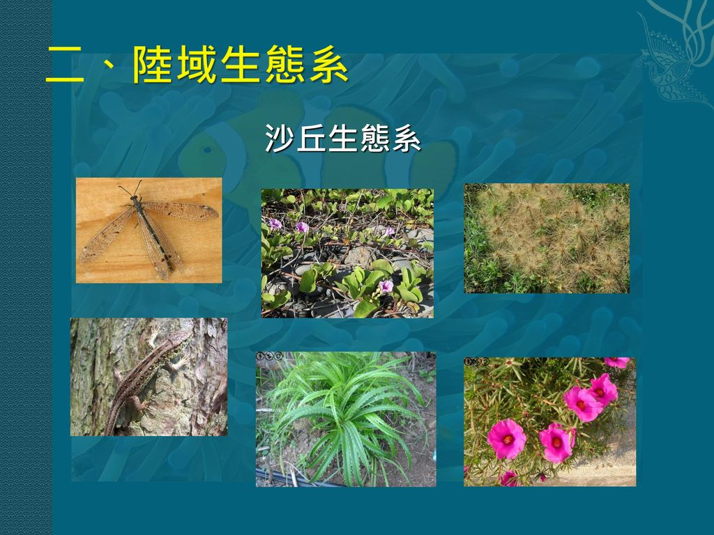 二、陸域生態系 沙丘生態系