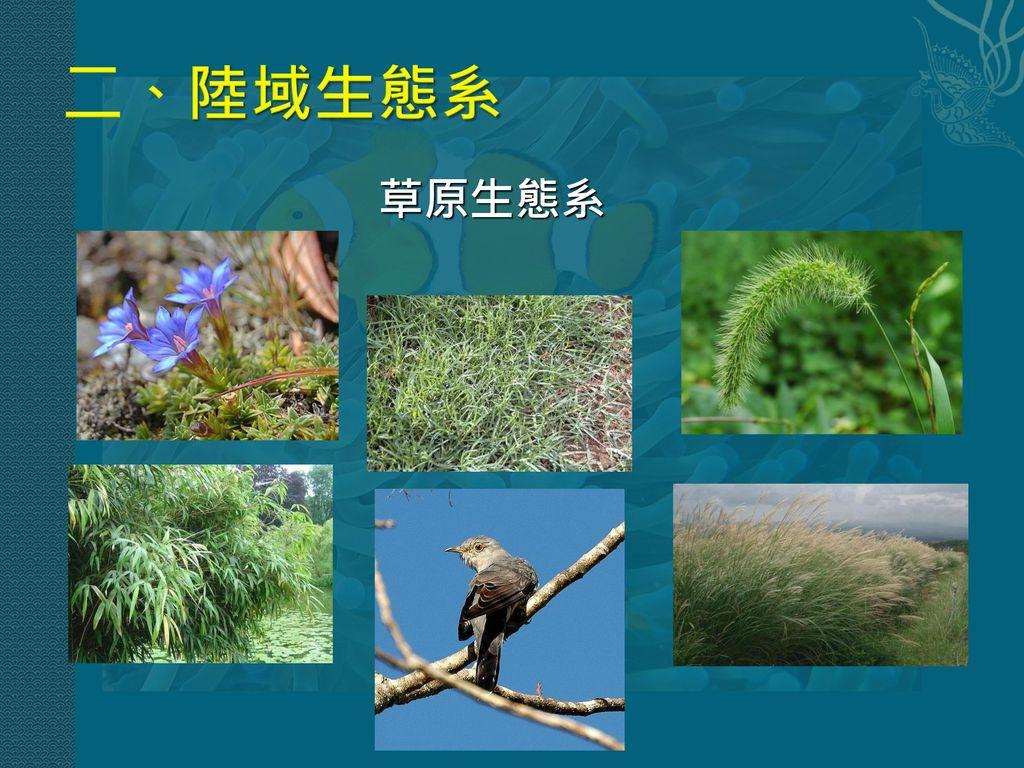 二、陸域生態系 草原生態系