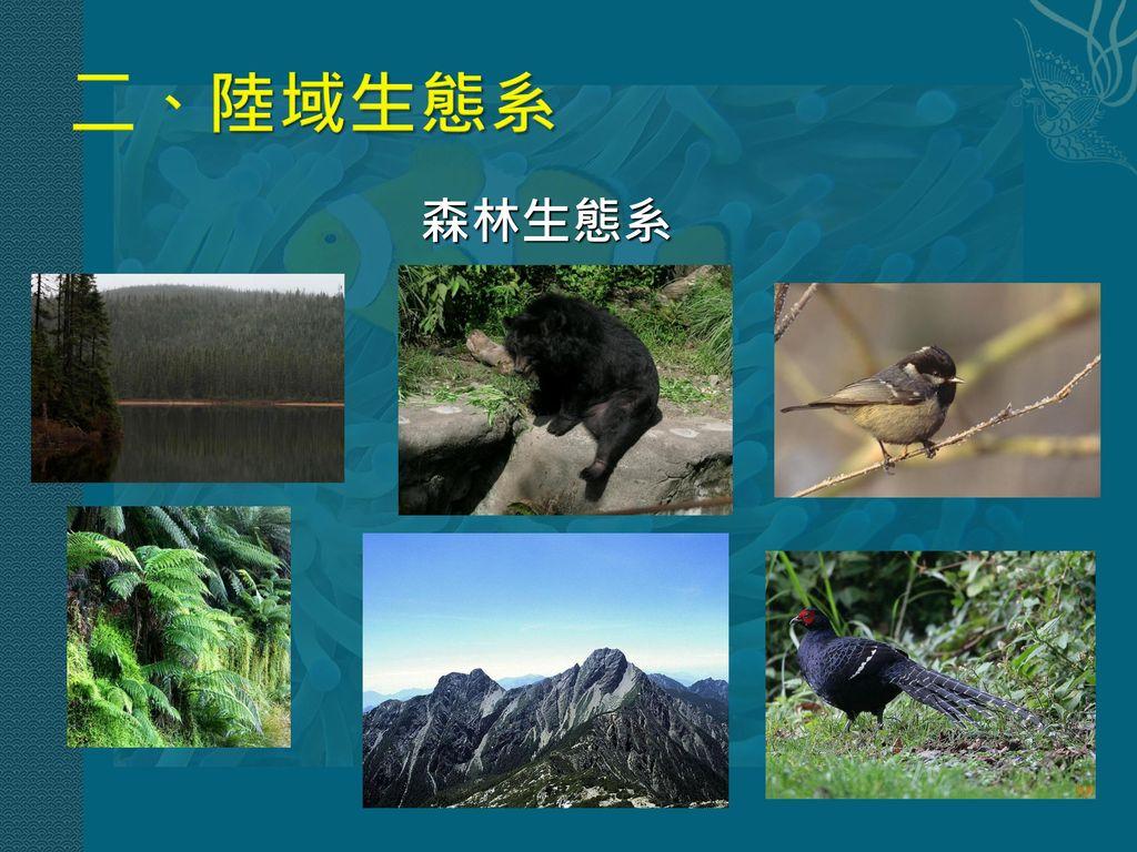 二、陸域生態系 森林生態系