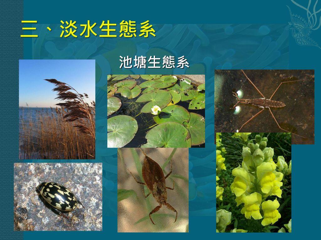 三、淡水生態系 池塘生態系