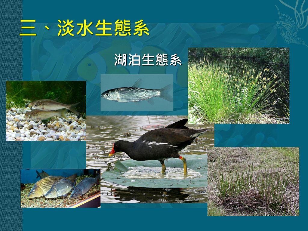 三、淡水生態系 湖泊生態系