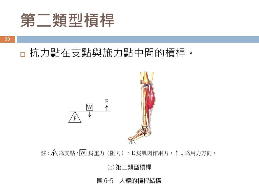 第二類型槓桿 抗力點在支點與施力點中間的槓桿。