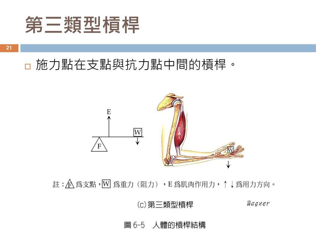 第三類型槓桿 施力點在支點與抗力點中間的槓桿。
