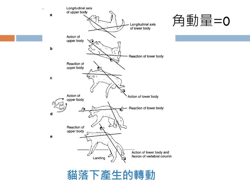 角動量=0 貓落下產生的轉動