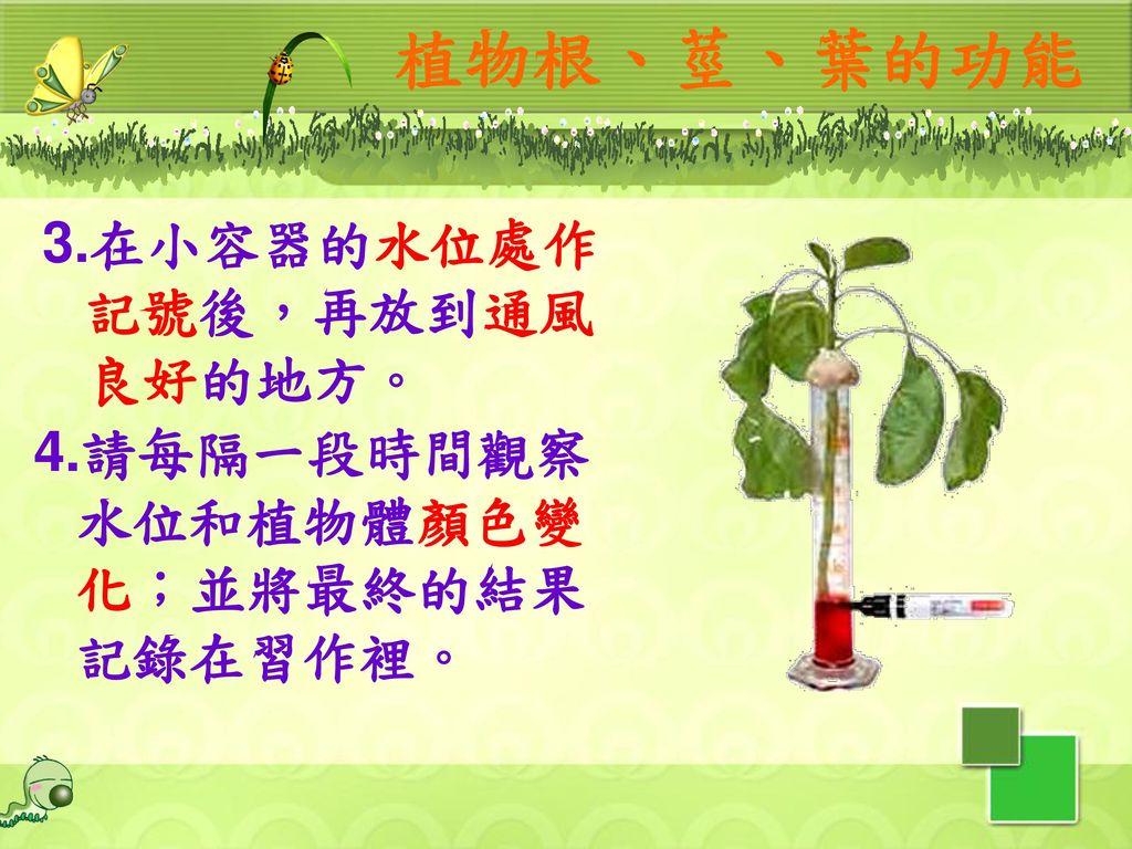 植物根、莖、葉的功能 3.在小容器的水位處作記號後,再放到通風良好的地方。