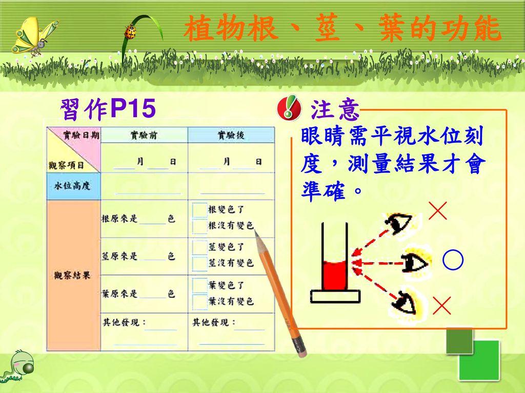 植物根、莖、葉的功能 習作P15 注意 眼睛需平視水位刻度,測量結果才會準確。 ╳ ○ ╳ 11