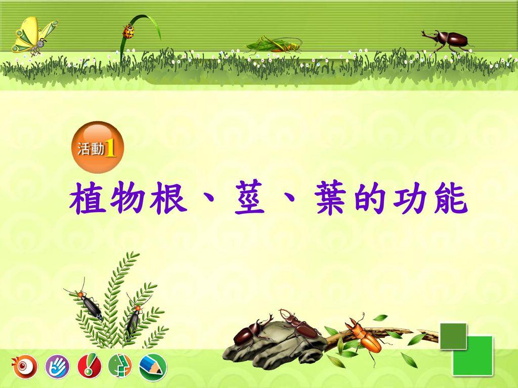 植物根、莖、葉的功能