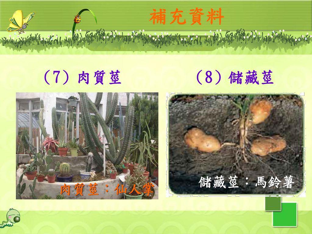 補充資料 (7)肉質莖 (8)儲藏莖 肉質莖:仙人掌 儲藏莖:馬鈴薯 31