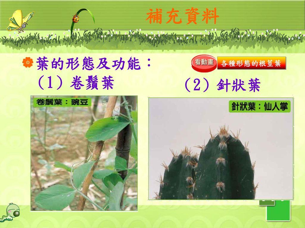 補充資料 葉的形態及功能: 各種形態的根莖葉 (1)卷鬚葉 (2)針狀葉 38