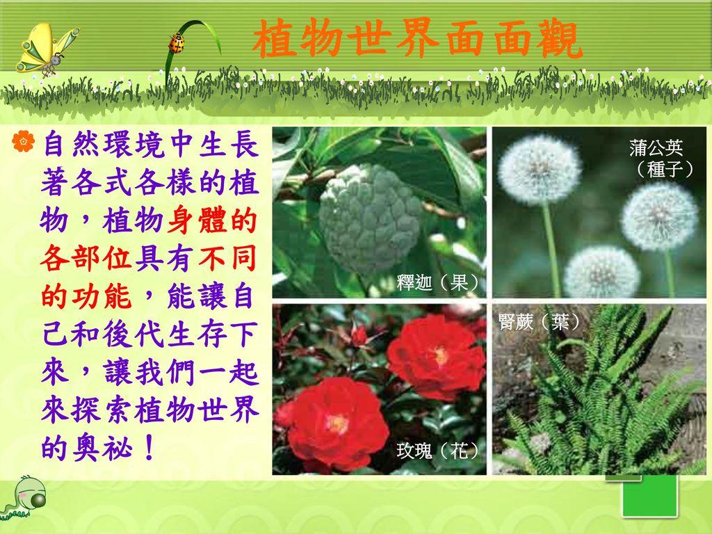 植物世界面面觀 自然環境中生長著各式各樣的植物,植物身體的各部位具有不同的功能,能讓自己和後代生存下來,讓我們一起來探索植物世界的奧祕!