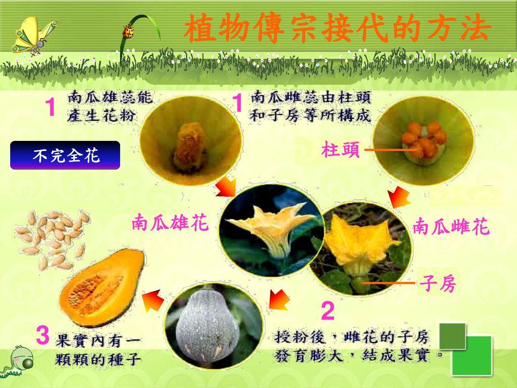 植物傳宗接代的方法 1 1 柱頭 不完全花 南瓜雄花 南瓜雌花 子房 2 3 46