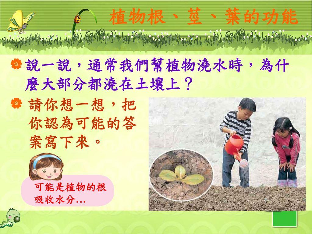 植物根、莖、葉的功能 說一說,通常我們幫植物澆水時,為什麼大部分都澆在土壤上? 請你想一想,把你認為可能的答案寫下來。