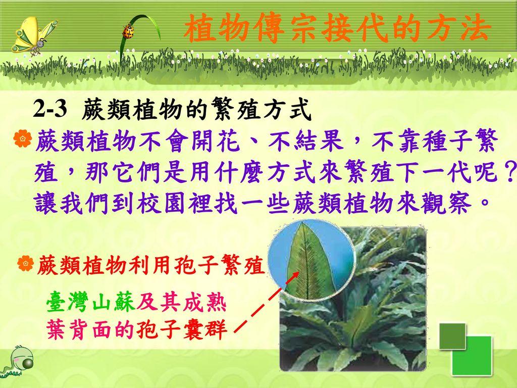 植物傳宗接代的方法 2-3 蕨類植物的繁殖方式. 蕨類植物不會開花、不結果,不靠種子繁殖,那它們是用什麼方式來繁殖下一代呢?讓我們到校園裡找一些蕨類植物來觀察。 蕨類植物利用孢子繁殖. 臺灣山蘇及其成熟葉背面的孢子囊群.