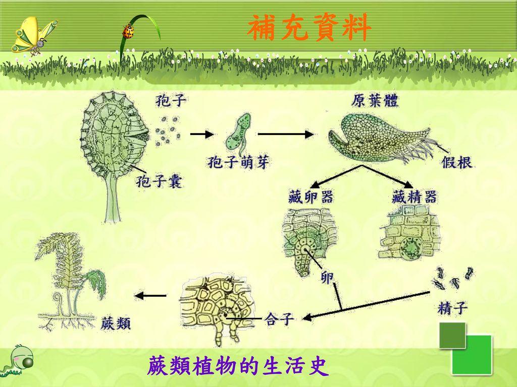 補充資料 蕨類植物的生活史 64