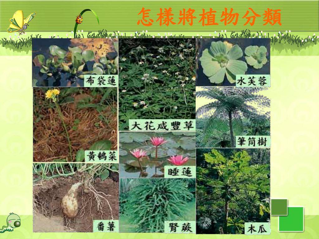 怎樣將植物分類 67