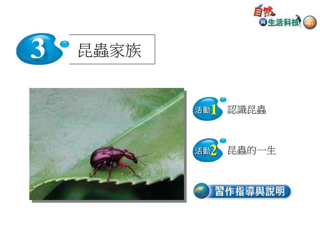昆蟲家族 認識昆蟲 昆蟲的一生