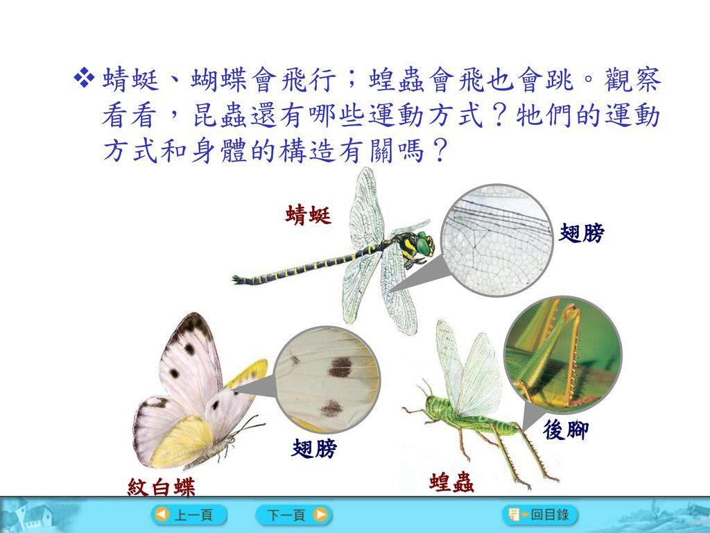 蜻蜓、蝴蝶會飛行;蝗蟲會飛也會跳。觀察看看,昆蟲還有哪些運動方式?牠們的運動方式和身體的構造有關嗎?