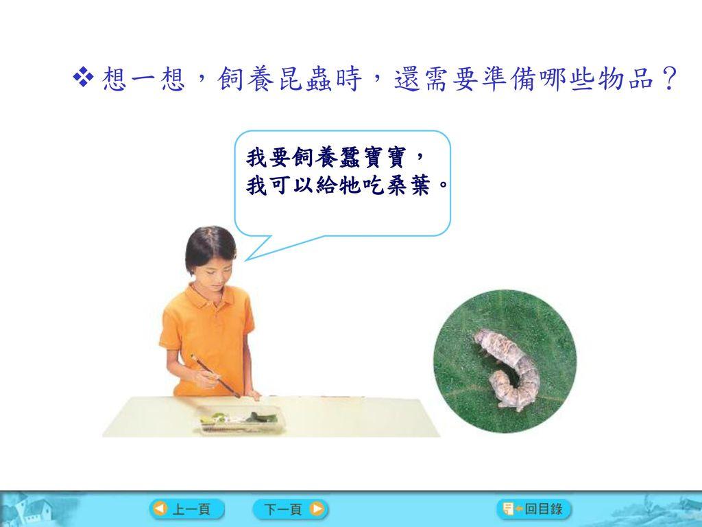 想一想,飼養昆蟲時,還需要準備哪些物品?