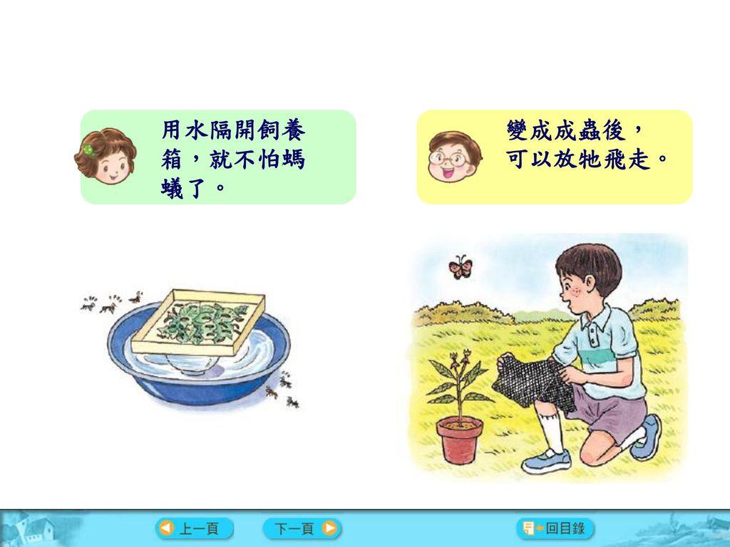 用水隔開飼養箱,就不怕螞蟻了。 變成成蟲後,可以放牠飛走。