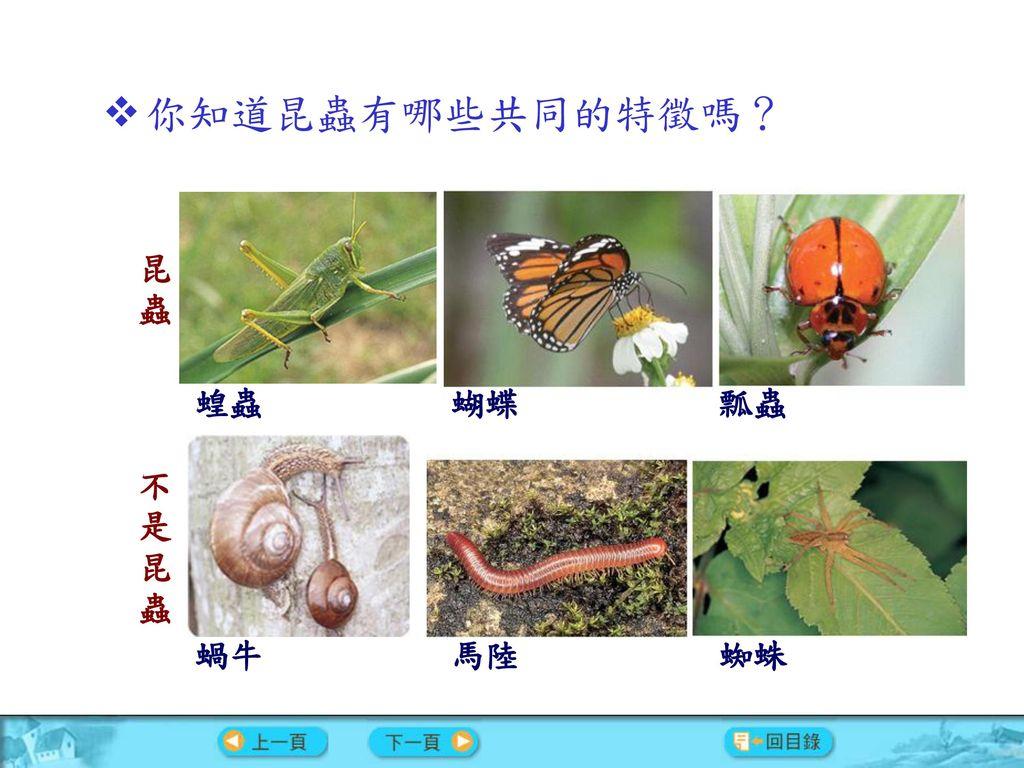 你知道昆蟲有哪些共同的特徵嗎? 昆蟲 蝗蟲 蝴蝶 瓢蟲 不是昆蟲 蝸牛 馬陸 蜘蛛