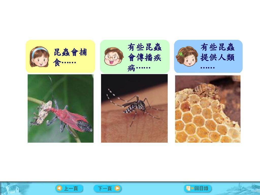 有些昆蟲會傳播疾病⋯⋯ 有些昆蟲提供人類⋯⋯ 昆蟲會捕食⋯⋯