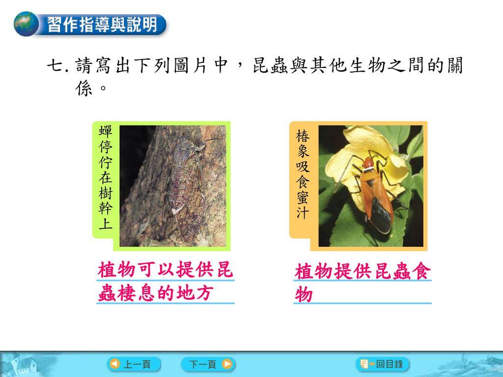 請寫出下列圖片中,昆蟲與其他生物之間的關係。