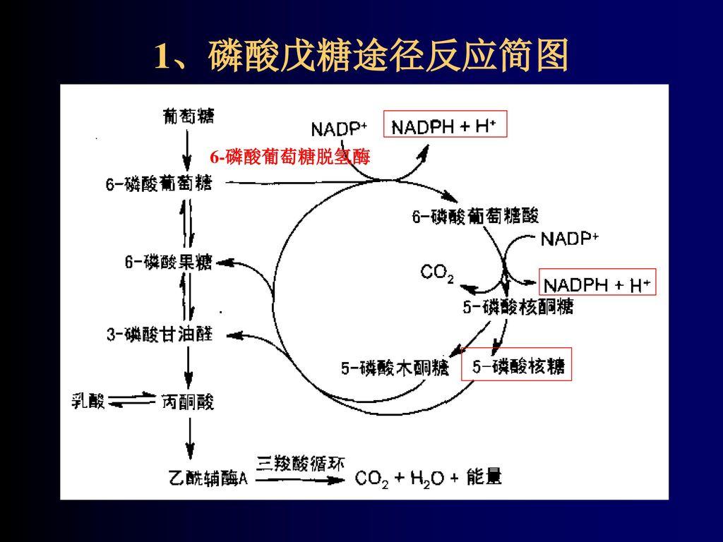 第九章 糖代谢 Metabolism of carbohydrates.