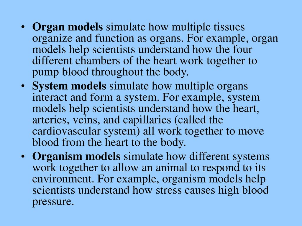 Organ models simulate how multiple tissues organize and function as organs. For example, organ models help scientists understand how the four different chambers of the heart work together to pump blood throughout the body.