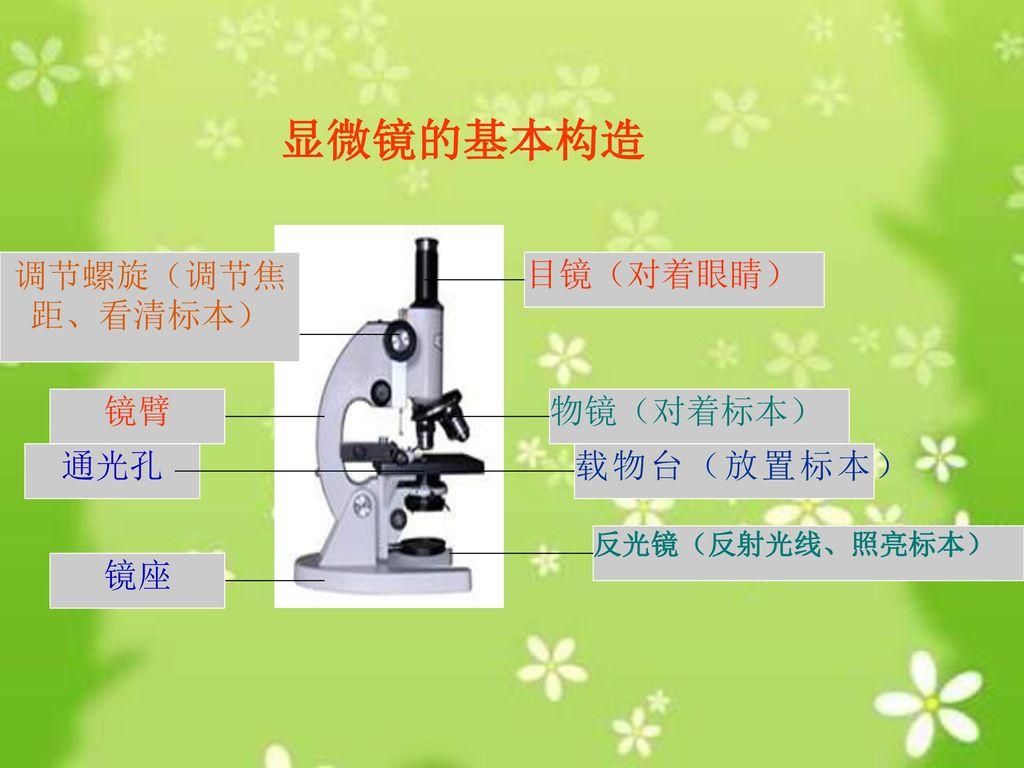 显微镜的基本构造 调节螺旋(调节焦距、看清标本) 目镜(对着眼睛) 镜臂 物镜(对着标本) 通光孔 载物台(放置标本) 镜座